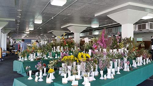 Plants Sale 2016